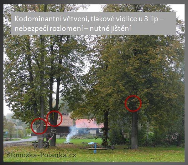 Větvení lip v parku Na staré škole - Stonožka Polanka